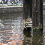 Nistplatz mitten in Amsterdam
