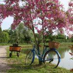 Idyll am Canal du Nivernais