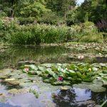 Die berühmten Seerosenteiche von Giverny (Claude Monets Gärten)
