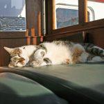 Nachbars Katze beim Mittagsschläfchen in unserem Steuerhaus