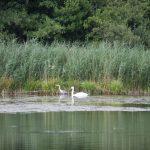 Étang de la Gazonne (Canal de Briare)