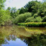 Water lillies near lock #25 (Canal de Briare)