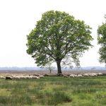 Dwingeloosche Heide (Provinz Drenthe)