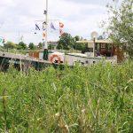 Marrekrite-Liegeplatz in Friesland