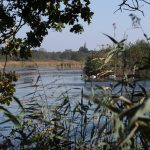 Natur pur in der Umgebung von Weesp