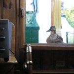 «Hallo, wo bleibt mein Brot?» Besuch von Madame Ente