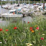 Port maritime de Saint Valery-sur-Somme