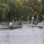 Berufsfischer auf der Havel (D)