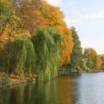 Herbst an der Dahme Wasserstrasse