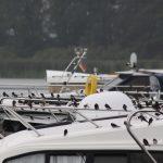 Die Vögel sammeln sich für den Flug nach Süden