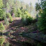 Auf der schmalen Woblitz nach Lychen: 180°-Biegung mit Begegnungsverbot