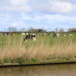 Zwischen Leeuwarden und Harlingen