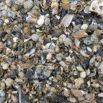 Am Strand von Harlingen