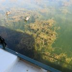 Verkrautetes Hafenbecken in Toul