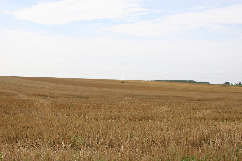 Kornfeld bei Variscourt
