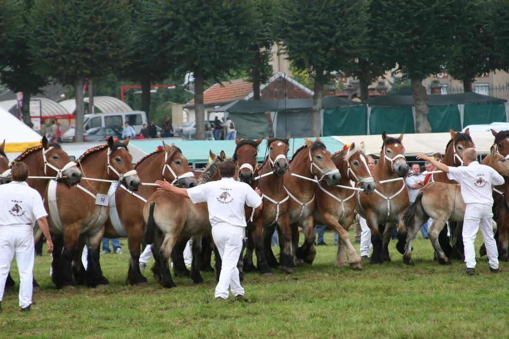 Pferdemarkt in Sedan