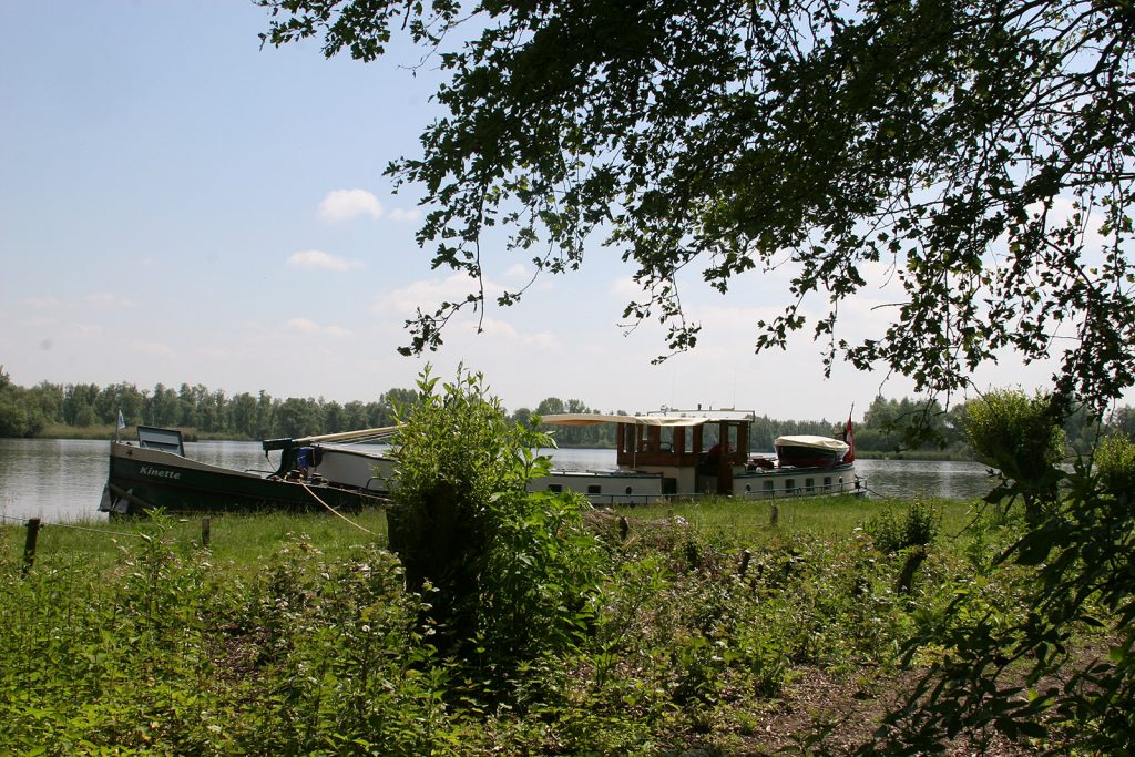 Natur pur im Biesbosch
