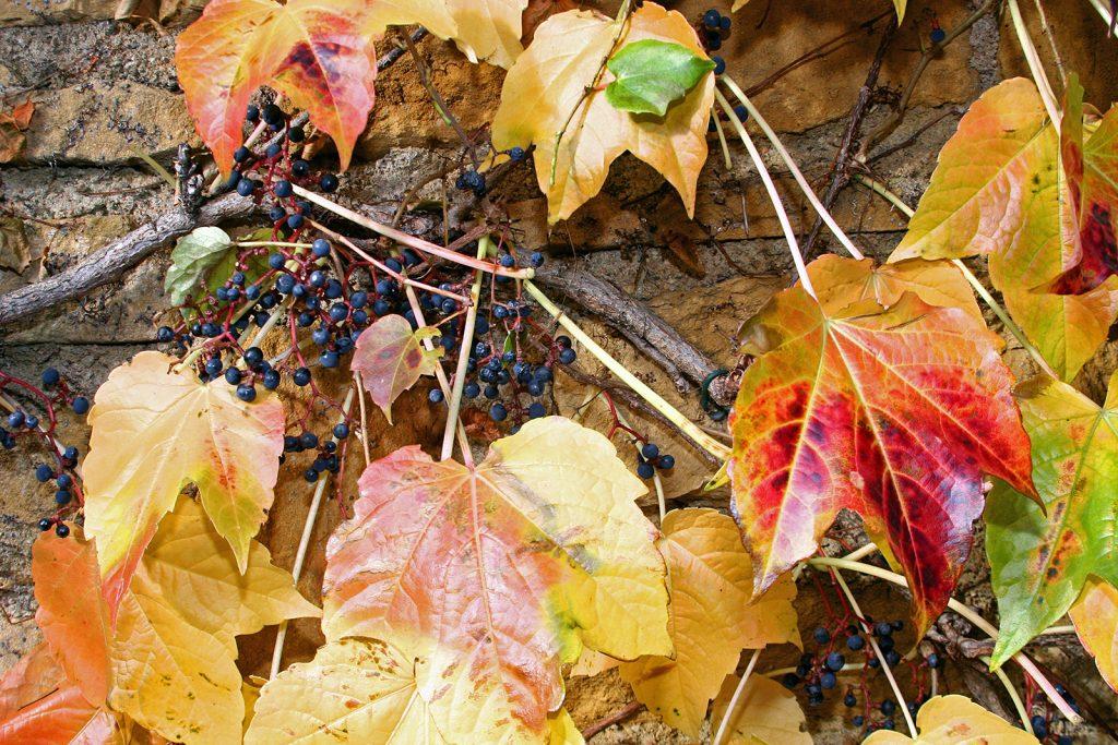 Herbst im Beaujolais