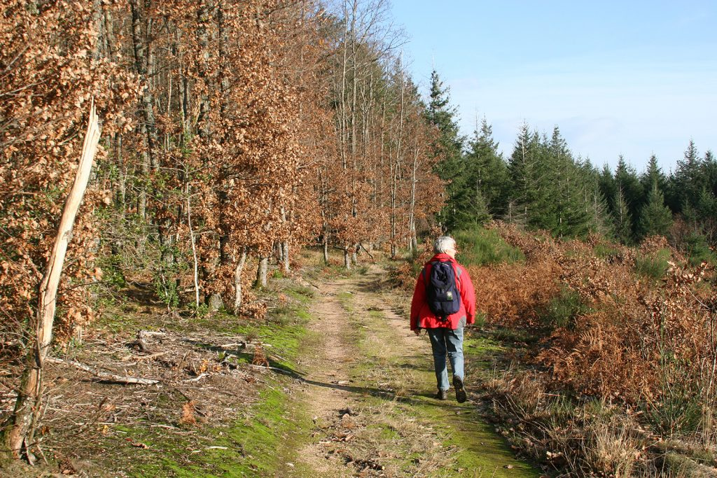 Herbstwanderung bei Roanne