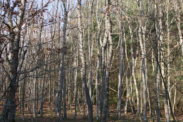 Herbstwald bei Roanne