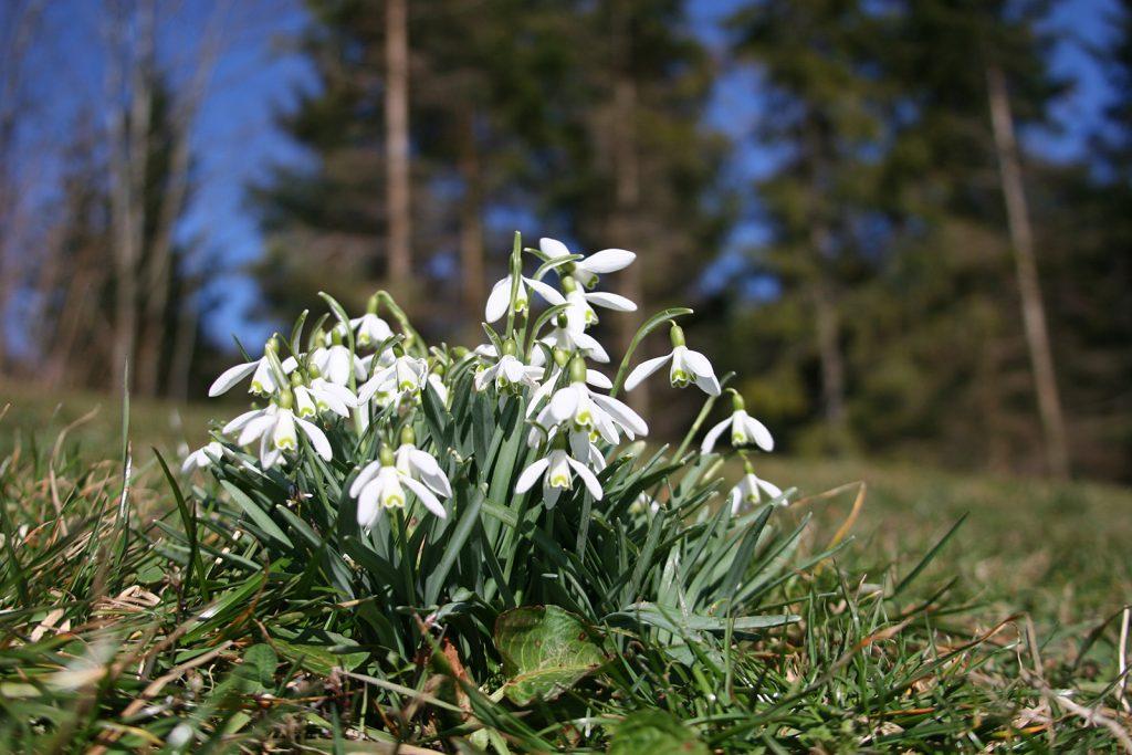 Frühlingsflora im Tössbergland
