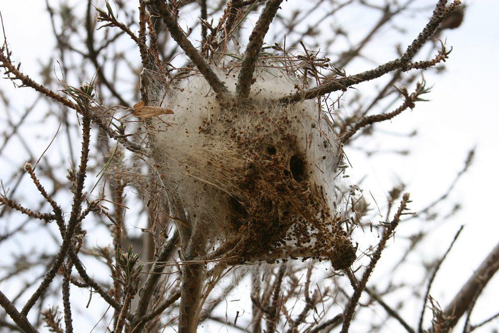 Welchem Tier gehört dieses Nest?