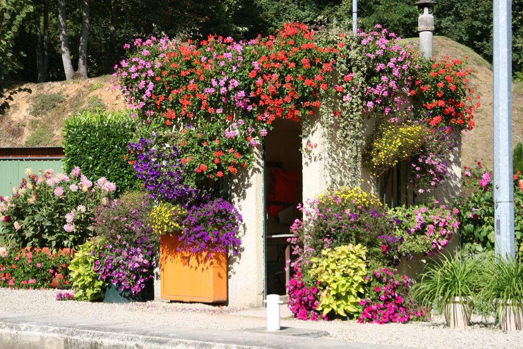 ...in voller Blumenpracht