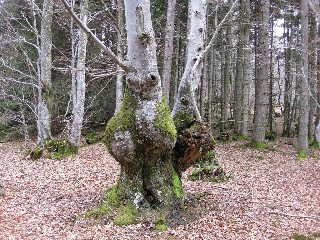 Die Bäume schauen uns ratlos an