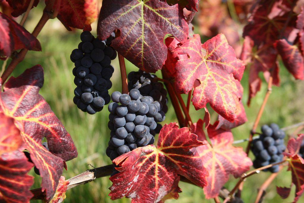 Herbst im Burgund