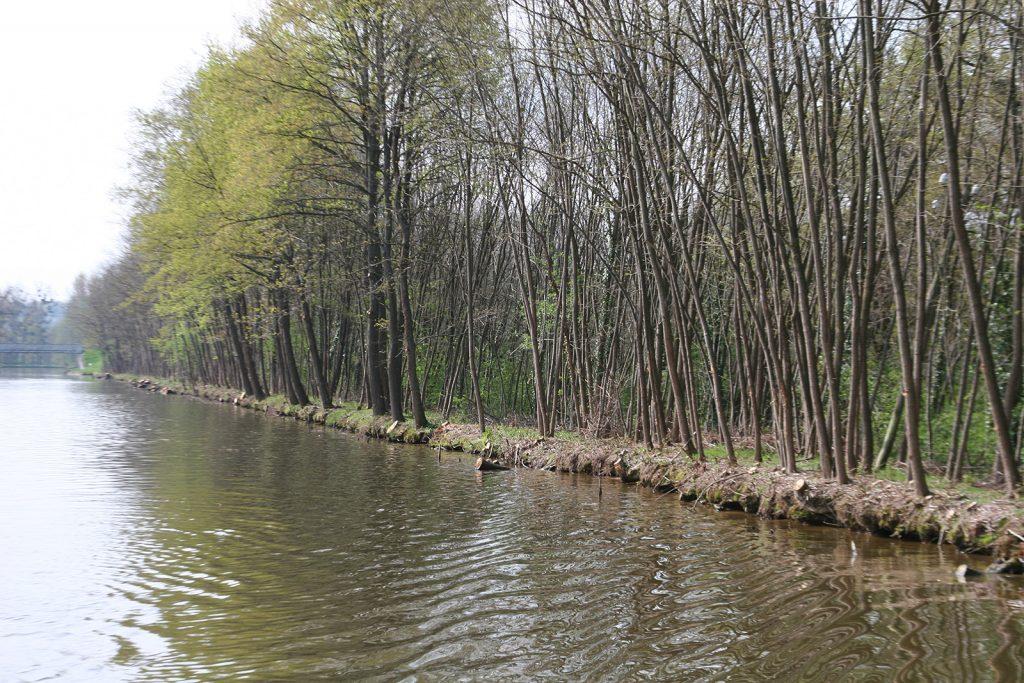 Die Kanalufer des Canal de Roanne à Digoin nach dem Baumschnitt