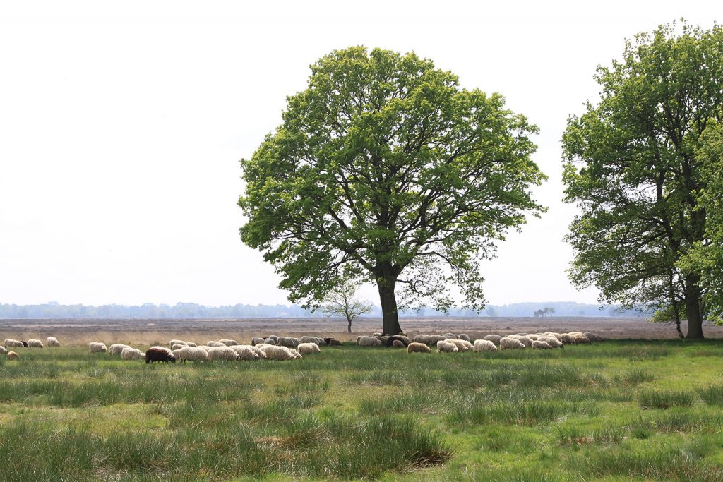 Nationalpark Dwingelderveld