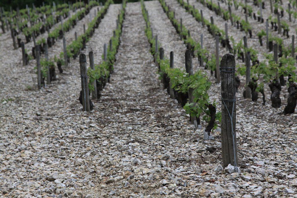 Idealer Boden für die Sancerre-Weine