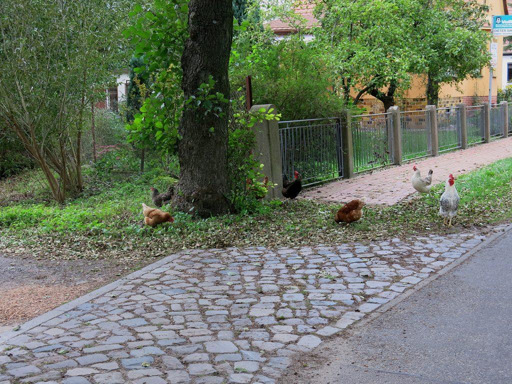 Gartenstadt-Idylle