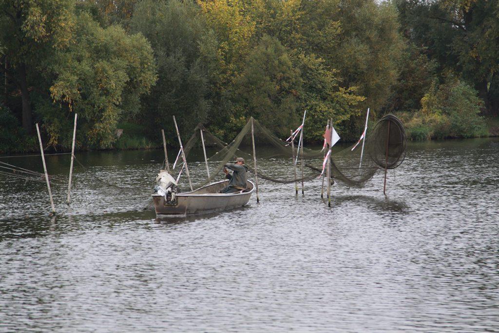 Havelfischer